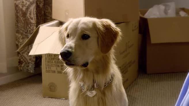 Vanoce pro psa   Zlate Vianoce 2  CZ dabing  2011