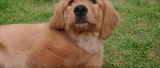 Psi poslani  A Dogs Purpose   2017  cz dabing  dobrodruzny  komedie  drama  rodinny  fantasy