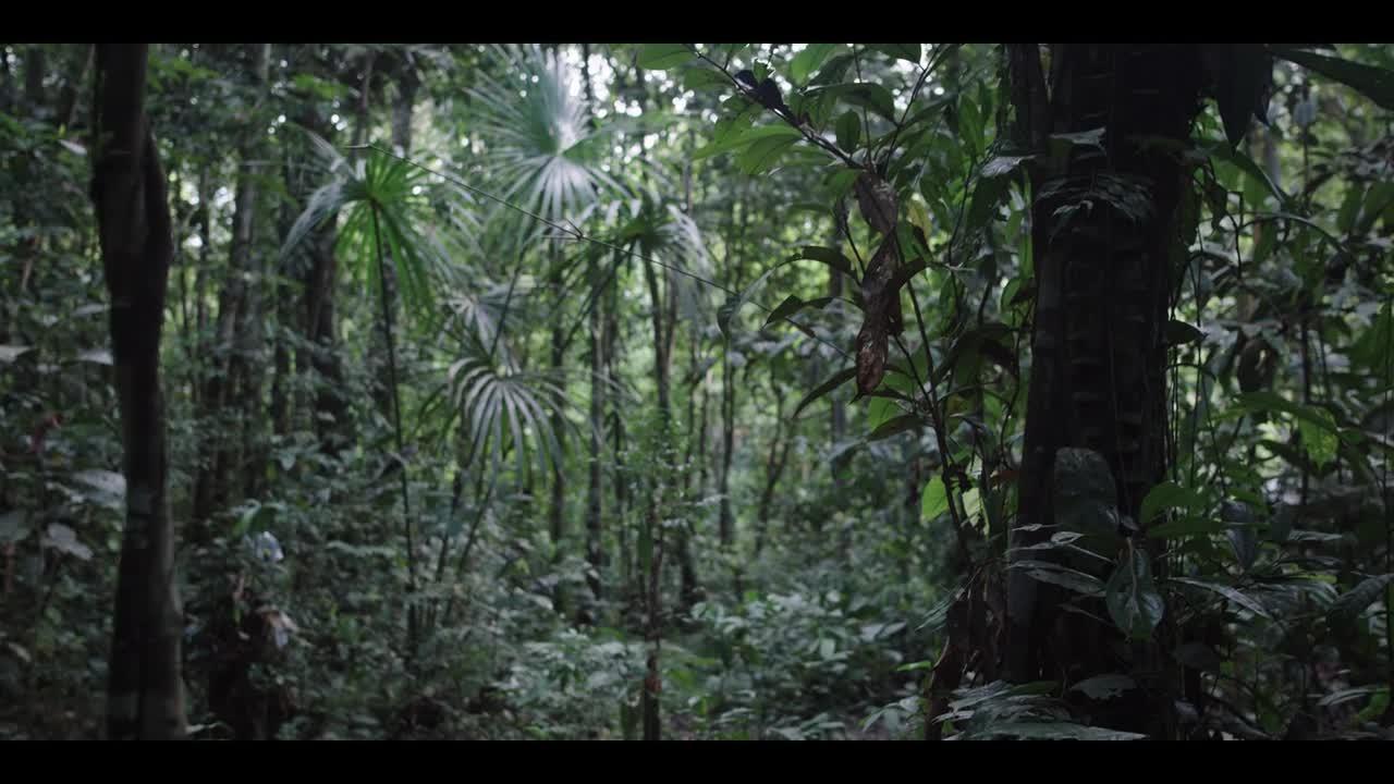 Frontera Verde S01E01 CZ titulky HD
