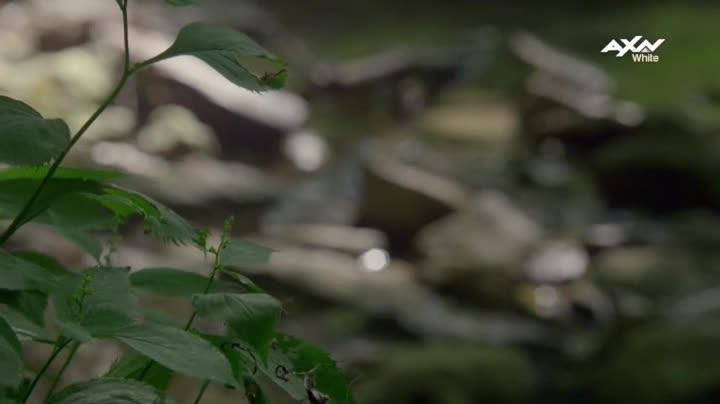 Kralovstvi  Reign  S04E07 Mece Damoklovi
