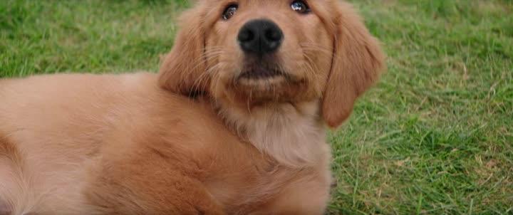 Psi poslani 2017   A Dogs Purpose 2017 cz dabing  dobrodruzny  komedie  drama  rodinny  fantasy  HD